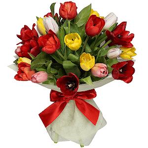 Тюльпаны (25 шт.)
